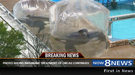 Photo Shows Orca Abuse At SeaWorld To Be Barbaric And