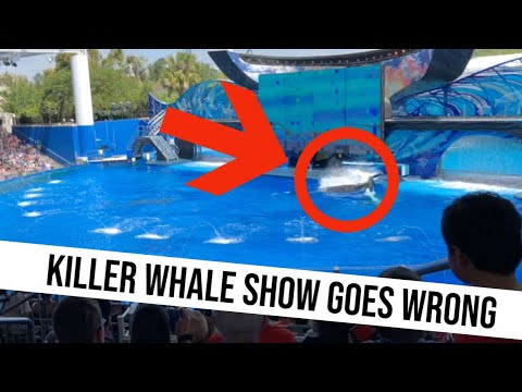 SeaWorld Cares THIS MUCH More About Cars Than Killer