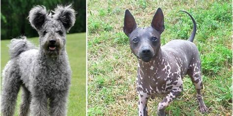 These New Dog Breeds Are Competing For A Big Prize