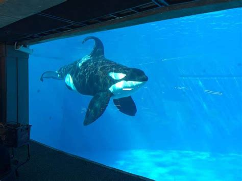 How to Help Orcas in 60 Seconds   Action   PETA