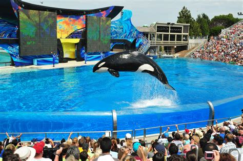 SeaWorld orcas live as long as whales in the wild, new